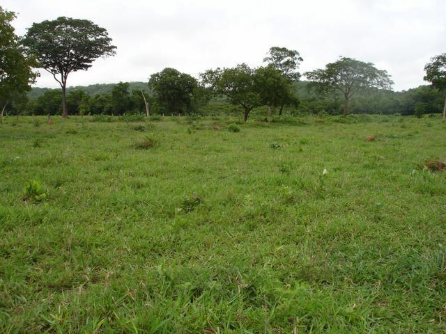 Fazenda em Poconé Cangas próximo á usina com 151 hectares - Foto 3