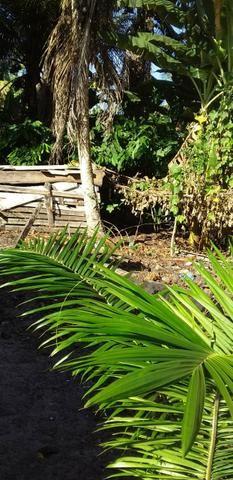 V/t terreno na Bahia - Foto 12