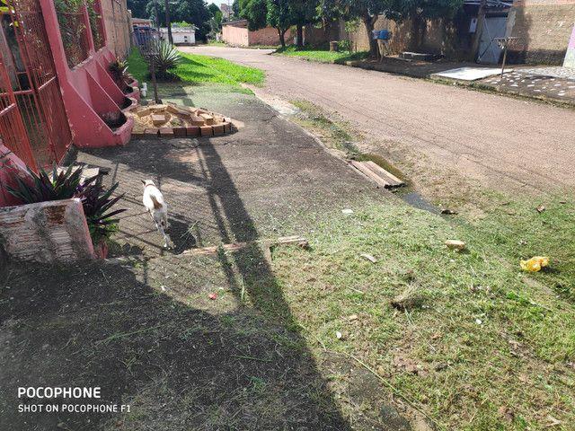 Roça Quintal mantenha limpo para evitar doença - Foto 5
