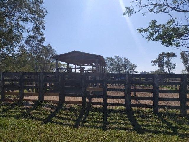 Velleda oferece linda fazenda 70 hectares 10 km da RS-040, aproveita 100% - Foto 4