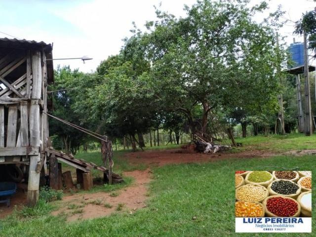 FAZENDA A VENDA EM SÃO GABRIEL DO OESTE - MS - (Pecuária) - Foto 13