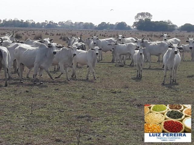 FAZENDA À VENDA EM PANTANAL NHECOLÂNDIA - MS - (Pecuária) - Foto 2