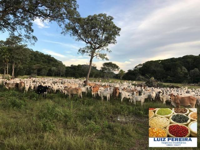 FAZENDA A VENDA EM CORUMBÁ - MS - DE 5435 HECTARES (Pecuária)