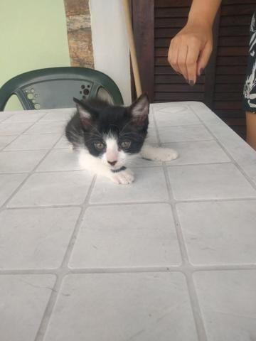 Gatinha e gatinho para doação - Foto 5