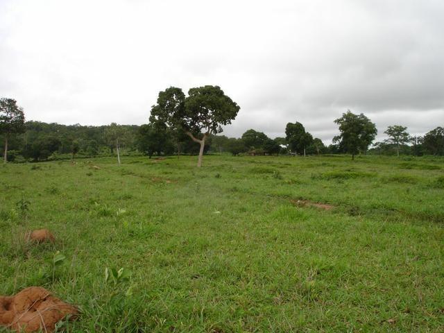 Fazenda em Poconé Cangas próximo á usina com 151 hectares - Foto 2