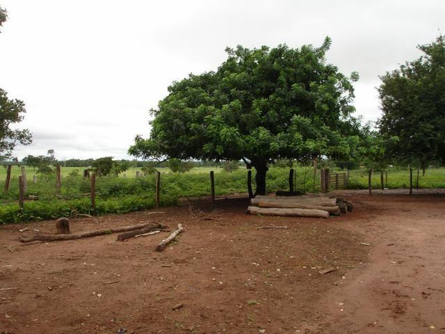 Fazenda em Poconé Cangas próximo á usina com 151 hectares - Foto 5