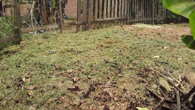 Roça Quintal mantenha limpo para evitar doença - Foto 2