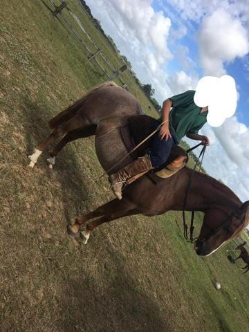 Égua crioula confirmada - Foto 2