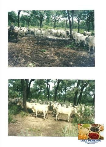 FAZENDA À VENDA EM PANTANAL NHECOLÂNDIA - MS -DE 7.460 HECTARES (Pecuária) - Foto 5