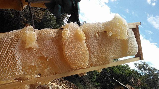 Procuro área para instalação de apiario em Piraí do Sul - Foto 5