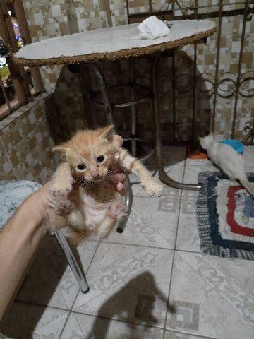 Doação de gatinhos.  - Foto 2