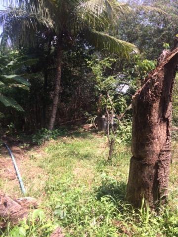 Ótimo Sítio 1,6 Hectares na Área Rural de Olinda, Aceito Automóvel ou imóvel - Foto 18