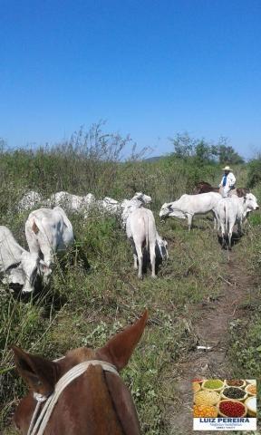 FAZENDA A VENDA EM CORUMBÁ - MS, DE 5.200 HECTARES (Pecuária) - Foto 5