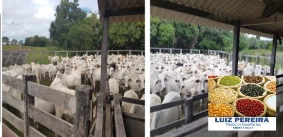 FAZENDA À VENDA EM PANTANAL NHECOLÂNDIA - MS -DE 7.460 HECTARES (Pecuária) - Foto 8