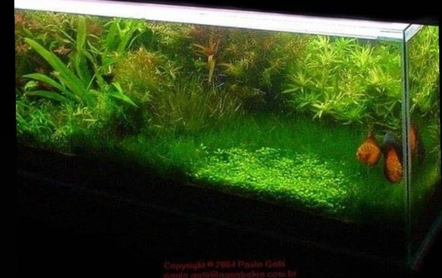 Professor particular de aquarismo - Foto 2