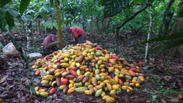 Fazenda Ilhéus Bahia/ Sul da Bahia - Foto 2