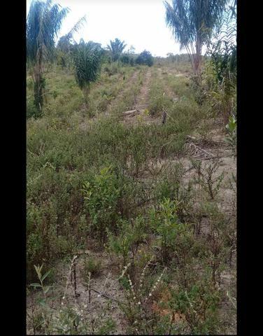 V/t terreno na Bahia - Foto 5