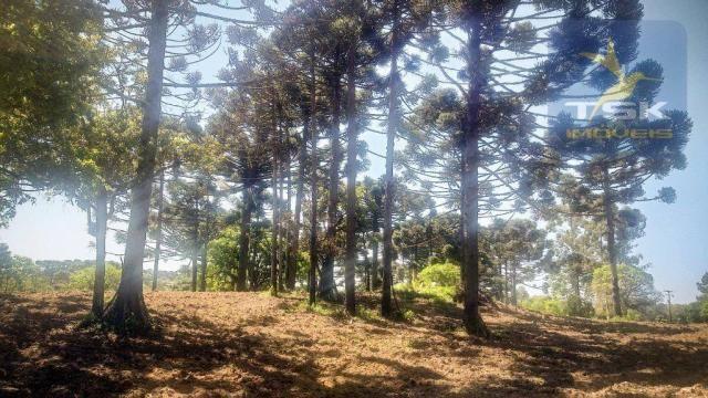 CH0407 - Chácara à venda, 2,5 Alqueires por R$ 195.000 - Zona Rural - Quitandinha/PR - Foto 2