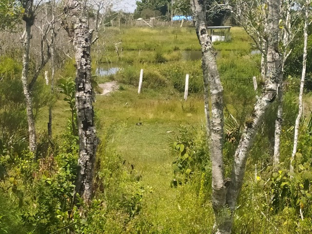 Velleda oferece sitio 3 hectares com casa e 2 açudes - Foto 12