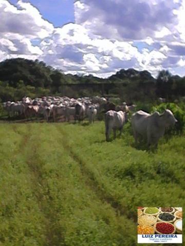 FAZENDA A VENDA EM CORUMBÁ - MS, DE 5.200 HECTARES (Pecuária) - Foto 4