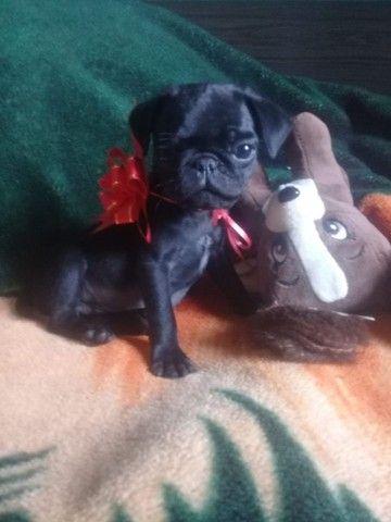 Pug - Foto 3