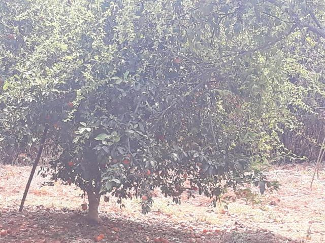 3 lotes em esmeraldas - Foto 9