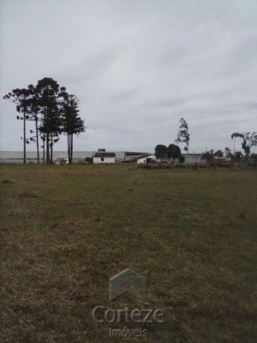 Terreno amplo no Costeira - Foto 6