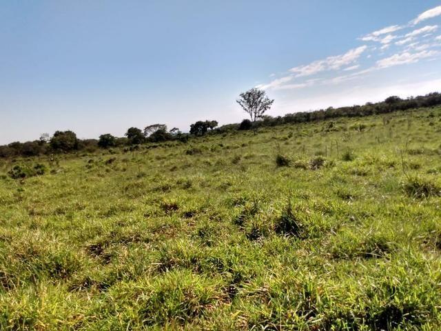 Fazenda, terra boa e pronta! - Foto 2