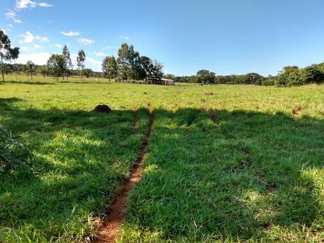 Fazenda, terra boa e pronta! - Foto 6