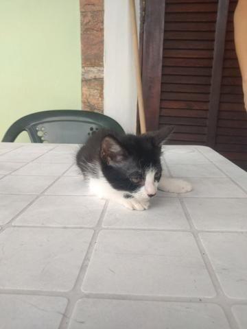 Gatinha e gatinho para doação - Foto 3