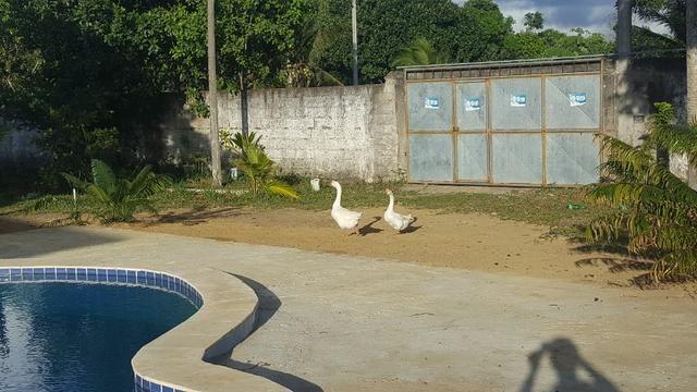 Chcara Paraiso Em Aldeia- R$500 a Diaria (exceto feriados) - Foto 6