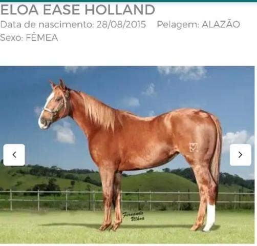 Eloa Ease Holland