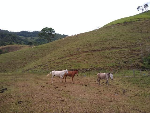 Fazenda de 150 alqueires ou seja 7.200.000 m² em Casimiro de Abreu, RJ - Foto 12