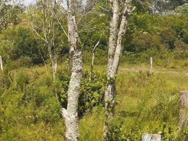 Velleda oferece sitio 3 hectares com casa e 2 açudes - Foto 13