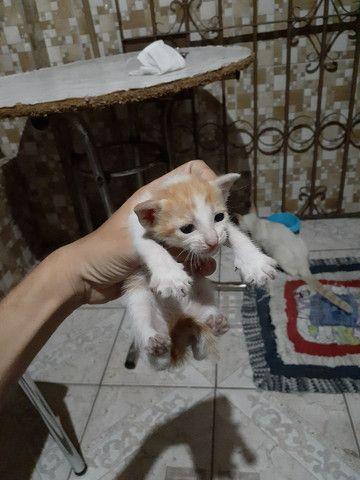 Doação de gatinhos.  - Foto 3