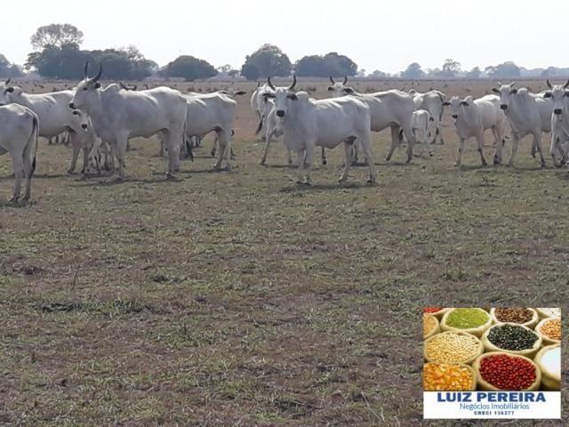 FAZENDA À VENDA EM PANTANAL NHECOLÂNDIA - MS - (Pecuária) - Foto 3
