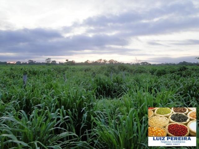 FAZENDA A VENDA EM CORUMBÁ - MS - DE 5435 HECTARES (Pecuária) - Foto 10