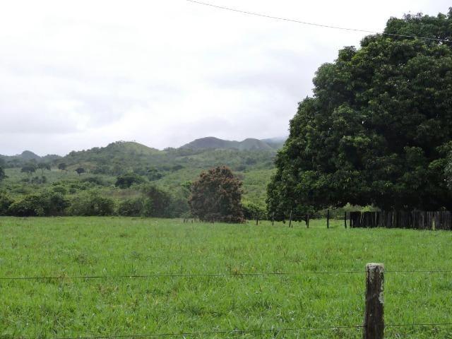Fazenda 80 Alqueires Municipio Vila Propricio - Foto 12