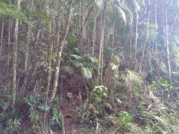 Terreno à venda, 3020 m² por r$ 56.000 - fazenda boa fé - teresópolis/rj - Foto 3