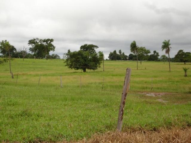Fazenda em Poconé Cangas próximo á usina com 151 hectares - Foto 6