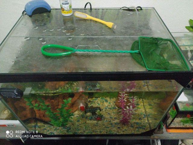 Troco aquário de 60 L por aquário de 120 L - Foto 2
