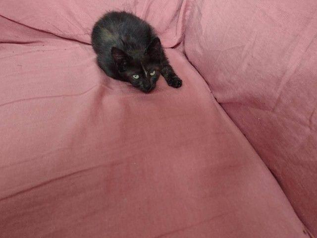 Doação de Gatos - Foto 2