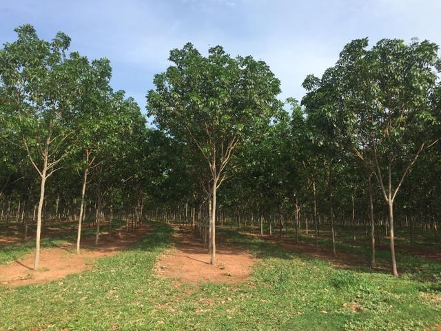 Fazenda em Frutal Minas Gerais Triângulo Mineiro - Foto 19