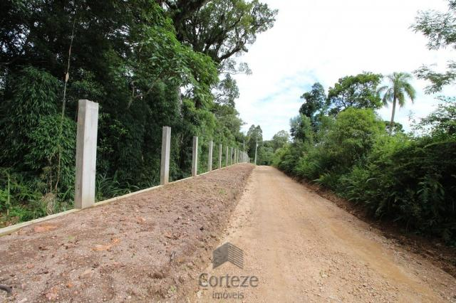 Terreno rural com 4.000 m² no Borda do Campo - Foto 2