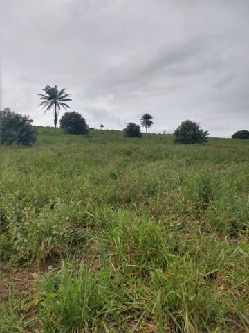 Vendo Fazendas - Foto 6