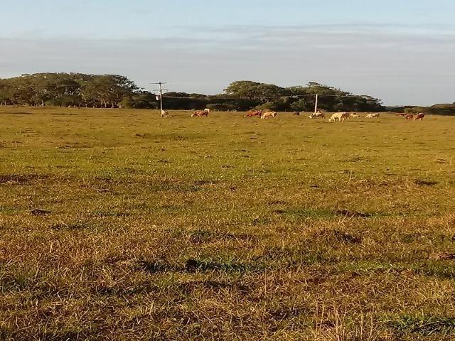 Bela Fazenda - Foto 19