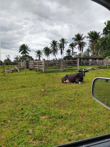 Vendo Fazendas - Foto 4