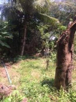 Granja-Chácara-Sítio 1,6 Hectares em Olinda, Aceito Automóvel ou imóvel - Foto 20
