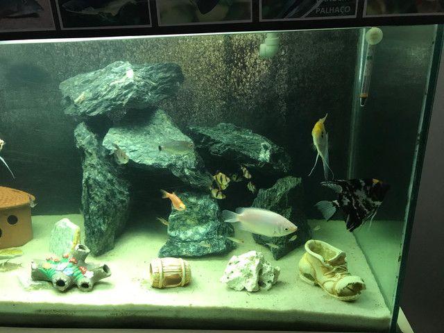 Aquario 400 litros completo - Foto 2