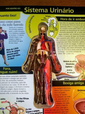 Livro O Corpo Humano Por Dentro Em 3d Livros E Revistas Auxiliadora Porto Alegre 795290680 Olx